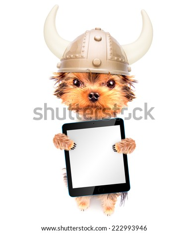 dog dressed up as a viking holding blank tablet pc - stock photo