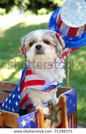 Dog dressed up for the 4th of July - stock photo