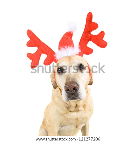 dog dressed up in reindeer antlers - stock photo