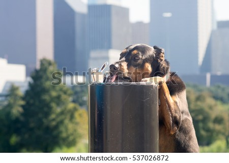 Dog drinking water from a drinking fountain in the background of a big city downtown. Houston, Texas, USA