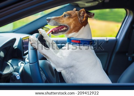 dog driving a steering wheel in a racing car - stock photo