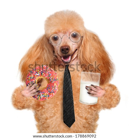 dog eating - stock photo