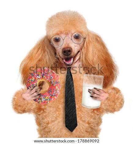 dog eating - stock photo
