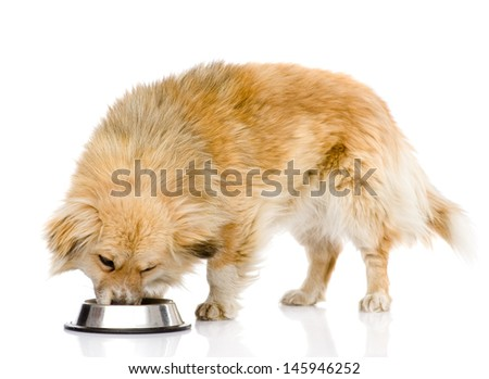 dog eating food from dish. isolated on white background
