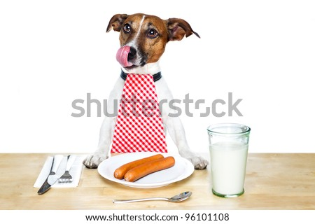 dog eating on table - stock photo