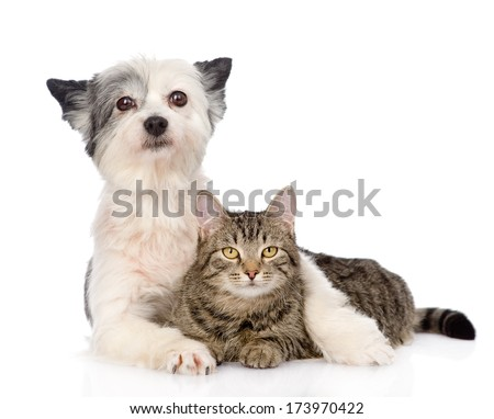 dog embracing cat. isolated on white background - stock photo