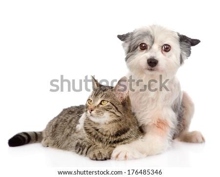 dog embracing cat. isolated on white background - stock photo