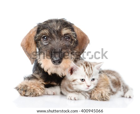 Dog embracing tiny kitten. isolated on white background