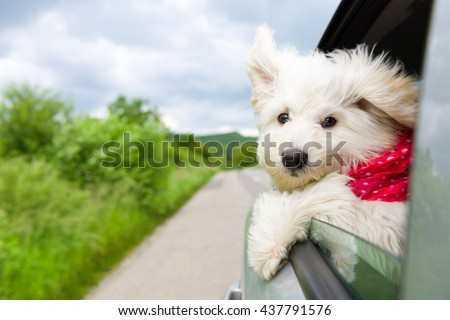 Dog enjoying a ride with the car - stock photo