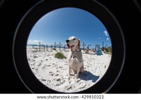 Dog enjoying white sand Beach