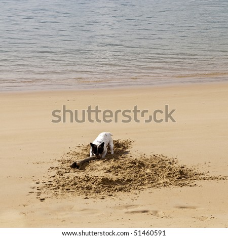 dog excavate in the sand on the beach - stock photo