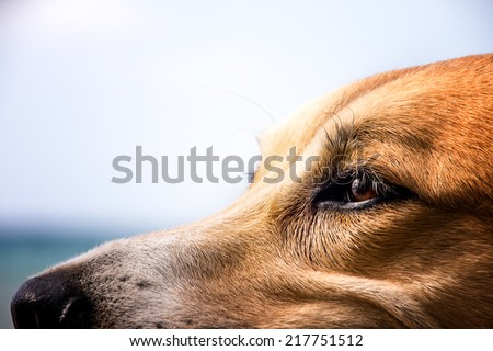 dog face detail, close-up - stock photo