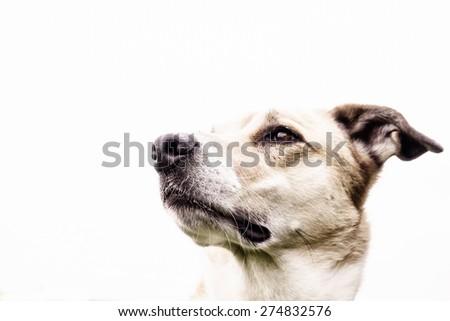 dog face, portrait - stock photo