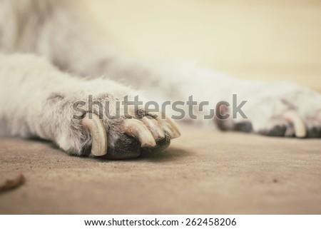 Dog foot - stock photo