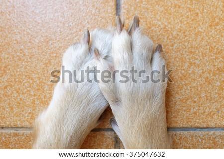 dog foot on the floor - stock photo
