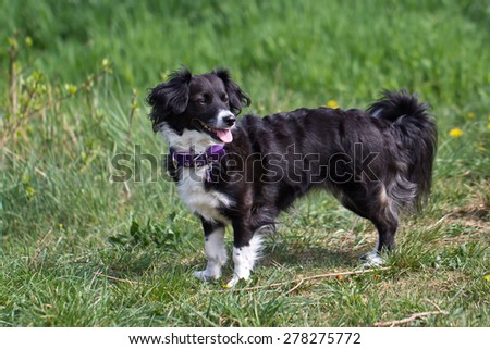 Dog for a walk / Dog running on the grass.