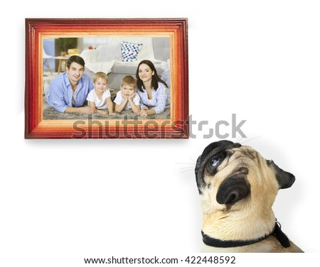 Dog from back looking of frame with photo, isolated on white - stock photo