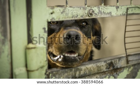 Dog from the Shelter - stock photo
