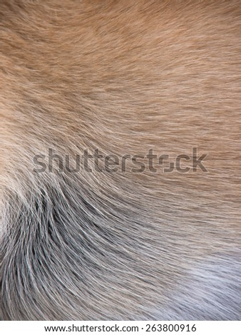 dog fur background - stock photo