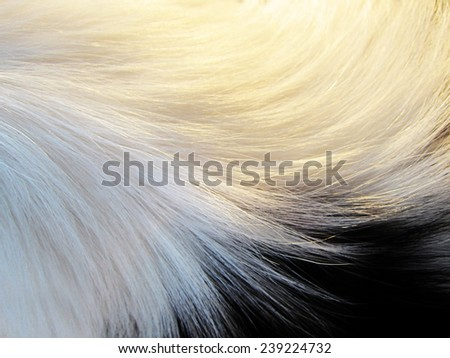 dog fur, detail, close-up, with short depth of field - stock photo