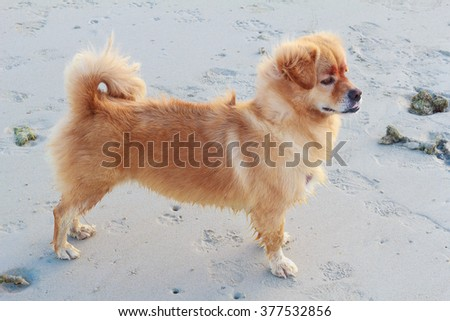 Dog furry Standing on beach - stock photo