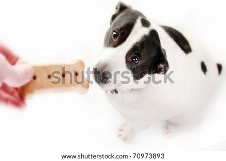 dog getting fed a treat - stock photo