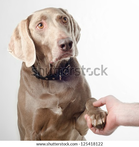 Dog gives a paw