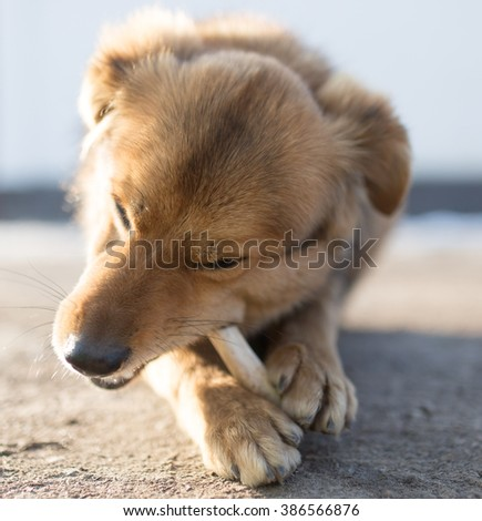 dog gnaws a bone in nature - stock photo