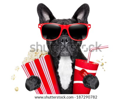 dog going to the movies with soda and glasses - stock photo