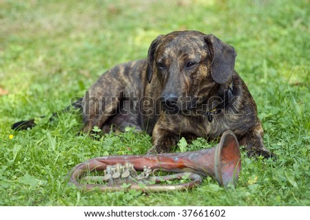 dog - guardian of trumpet