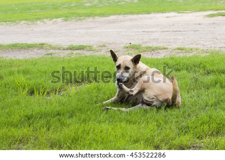 dog happy play on grass