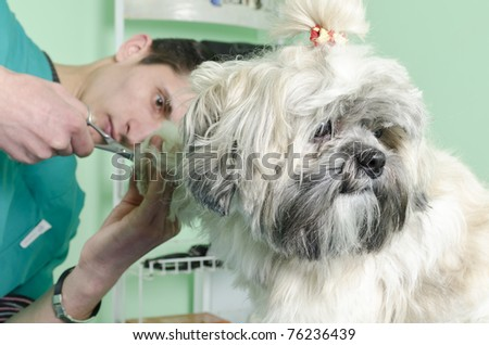 dog having a haircut