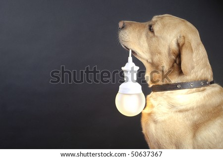 dog holding a lamp, black background