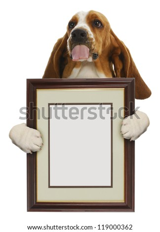 dog holding blank picture frame isolated on white background - stock photo