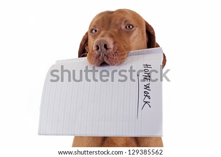 dog holding homework in mouth on white background - stock photo