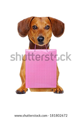 Dog holding paper bag - stock photo