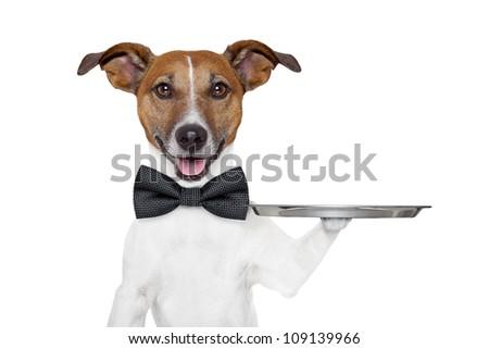 dog holding service tray - stock photo
