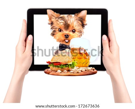 dog holding service tray with food and drink on a digital tablet screen - stock photo