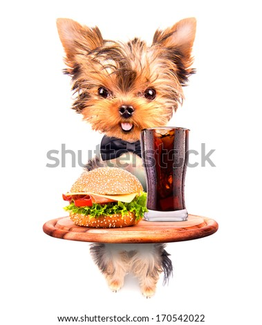 dog holding service tray with food and drink -  soda and hamburger - stock photo