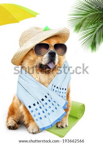 Dog. Holidays at sea - stock photo