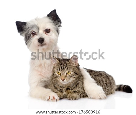 dog hugging cat. isolated on white background - stock photo