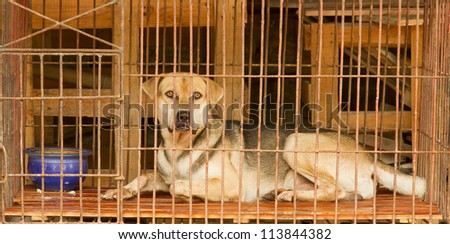 Dog in a cage in Vietnam. In Vietnam dogs are often used for consumption. - stock photo