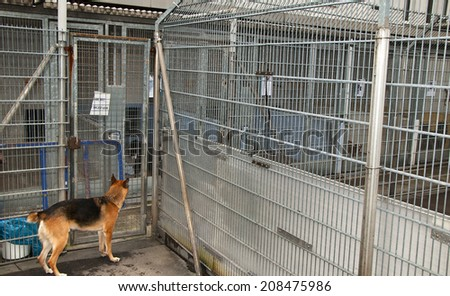 Dog in a dungeon at animal shelter  - stock photo