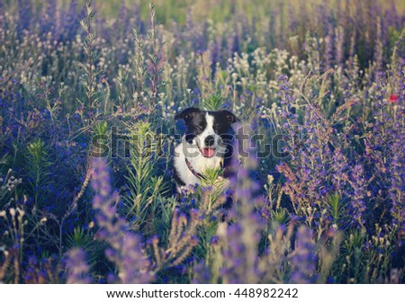 dog in a flower field