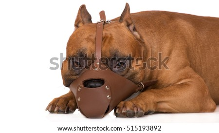 dog in a muzzle on white