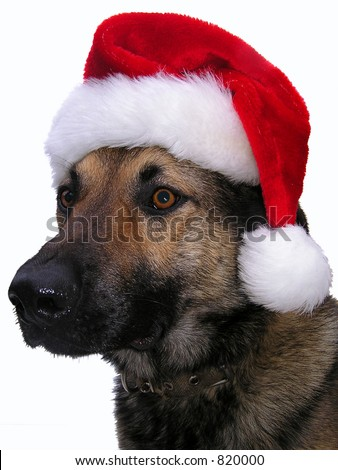 Dog in a red hat - stock photo