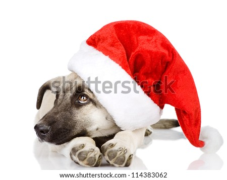 dog in a Santa Claus hat. isolated on white background - stock photo
