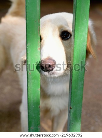 Dog in a shelter - stock photo