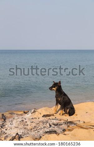 Dog in an extinct fire on the sandy beach - stock photo