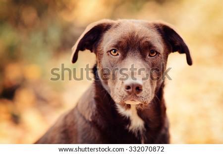 dog in autumn scenery - stock photo